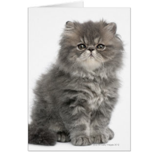 Persian Kitten (2 months old) sitting Card