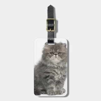 Persian Kitten (2 months old) sitting Luggage Tag