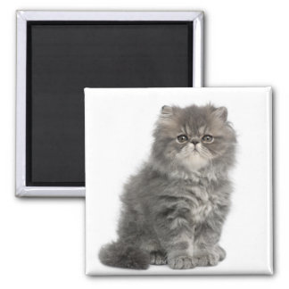 Persian Kitten (2 months old) sitting Magnets