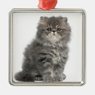 Persian Kitten (2 months old) sitting Metal Ornament