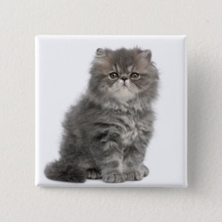 Persian Kitten (2 months old) sitting Pinback Button