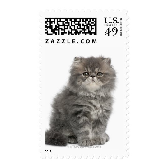 Persian Kitten (2 months old) sitting Postage