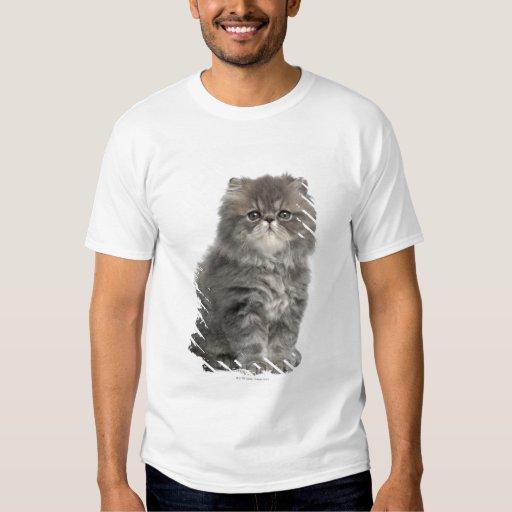 Persian Kitten (2 months old) sitting Shirt