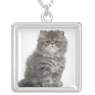 Persian Kitten (2 months old) sitting Silver Plated Necklace