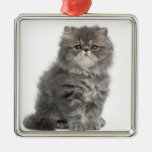 Persian Kitten (2 months old) sitting Square Metal Christmas Ornament