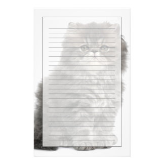 Persian Kitten (2 months old) sitting Stationery