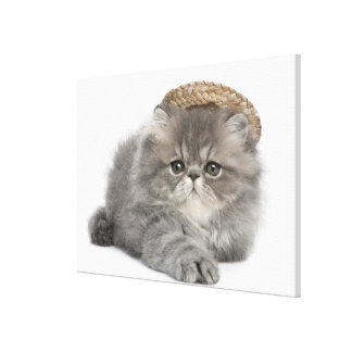 Persian Kitten (2 months old) wearing a straw Canvas Print