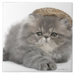 Persian Kitten (2 months old) wearing a straw Large Square Tile