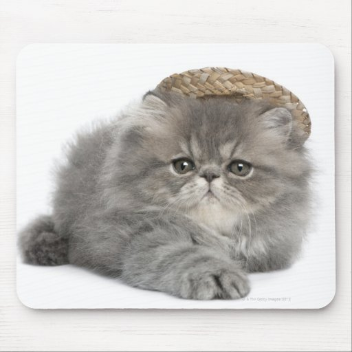 Persian Kitten (2 months old) wearing a straw Mouse Pad