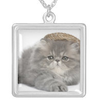 Persian Kitten (2 months old) wearing a straw Custom Necklace