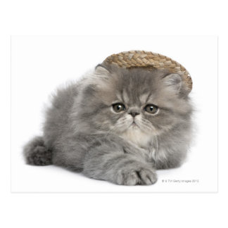 Persian Kitten (2 months old) wearing a straw Postcard