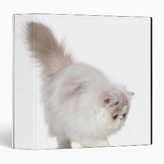 Persian kitten (3 months old) binder