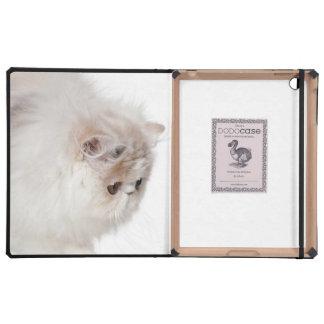 Persian kitten (3 months old) iPad folio cases