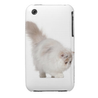 Persian kitten (3 months old) iPhone 3 cases
