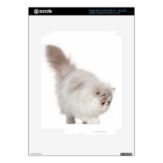 Persian kitten (3 months old) iPad 3 decals