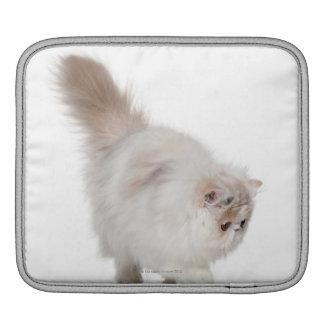 Persian kitten (3 months old) iPad sleeves