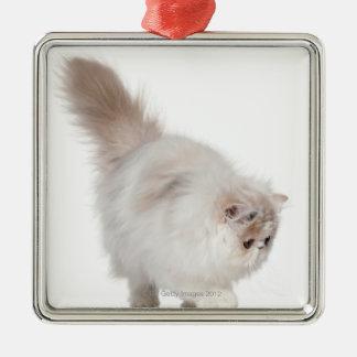 Persian kitten (3 months old) metal ornament