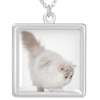 Persian kitten (3 months old) silver plated necklace