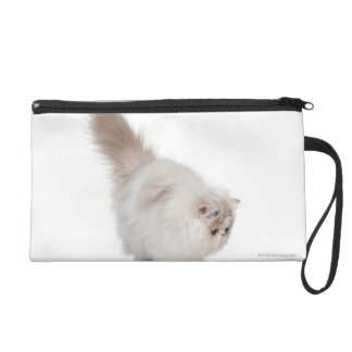 Persian kitten (3 months old) wristlet purse
