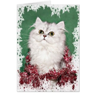 Maine coon cat christmas cards archives the cool card shop persian kitten christmas card m4hsunfo