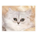 Persian kitten face post cards