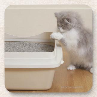 Persian Kitten looking at litter box Beverage Coasters