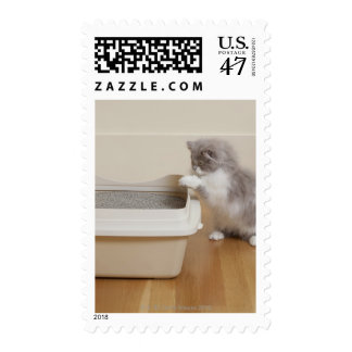 Persian Kitten looking at litter box Postage