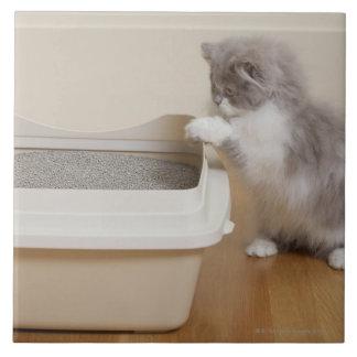 Persian Kitten looking at litter box Tile
