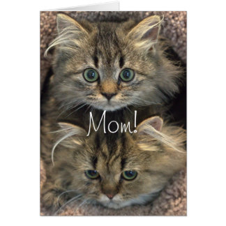 Persian Kitten Mother's Day Card