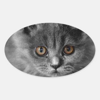 Persian Kitten Oval Sticker