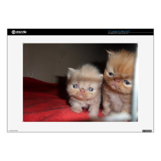 "Persian Kittens Decals For 15"" Laptops"