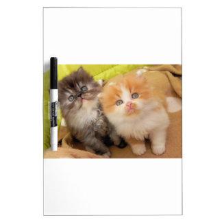 Persian Kittens; Hug Me Please! Dry-Erase Board