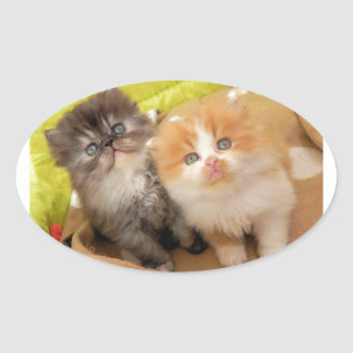 Persian Kittens; Hug Me Please! Oval Sticker