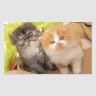Persian Kittens; Hug Me Please! Rectangular Sticker