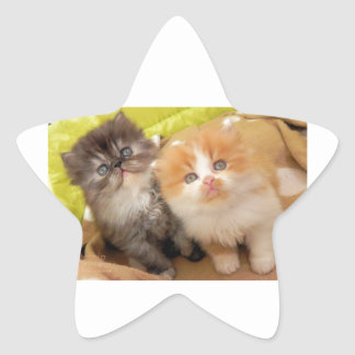 Persian Kittens; Hug Me Please! Star Sticker