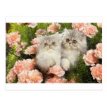Persian Kittens Play in Pink Flowers Postcard