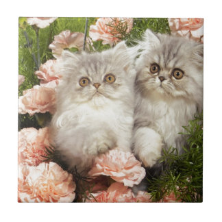 Persian Kittens Play in Pink Flowers Small Square Tile