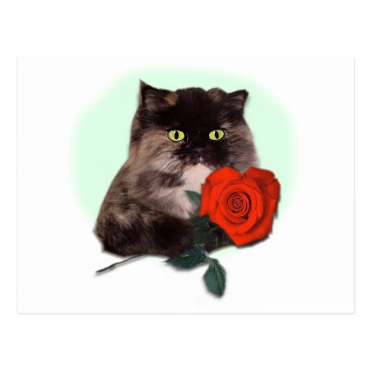 Persian Kitty with Rose Postcard