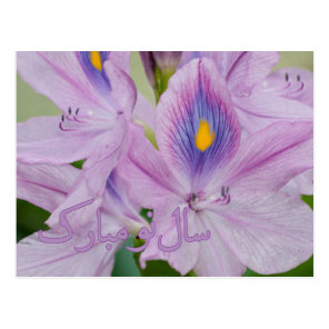 Persian New Year Nowruz Water Hyacinth Postcard