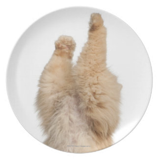 Persian playing (3 years old) melamine plate