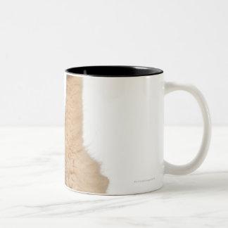 Persian playing (3 years old) Two-Tone coffee mug