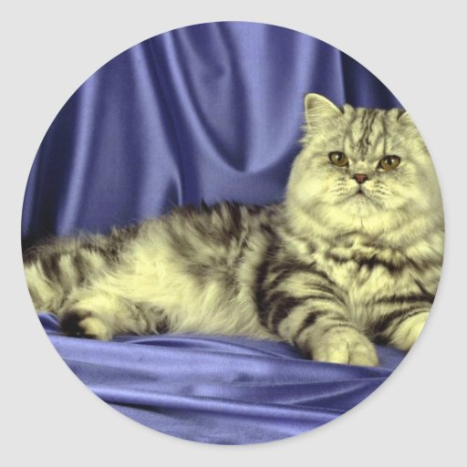 Persian, silver tabby classic round sticker