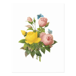 Persian yellow rose, tea rose by Redouté Post Cards