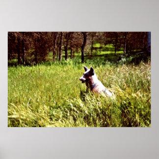 Persiga al vigilante del perro guardián en las mad póster
