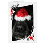 Persiga el gorra del navidad en la nariz, colmillo tarjeta pequeña
