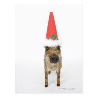 Persiga en gorra del navidad postal