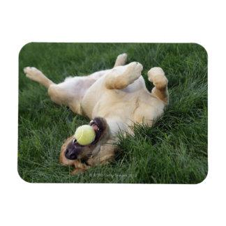 Persiga la colocación upside-down en hierba con la imanes flexibles