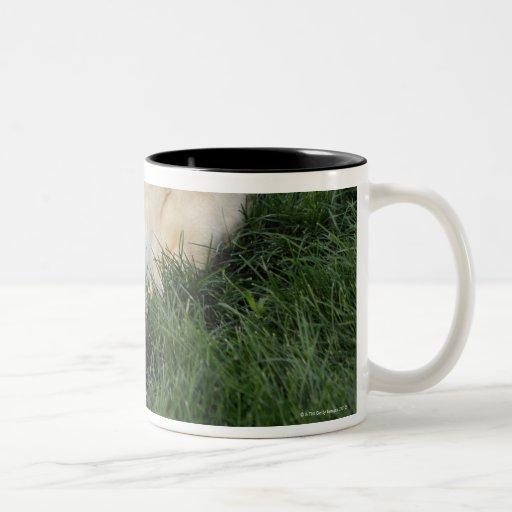 Persiga la colocación upside-down en hierba con la taza de dos tonos