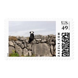 Persiga sentarse en una pared de piedra irlandesa estampillas