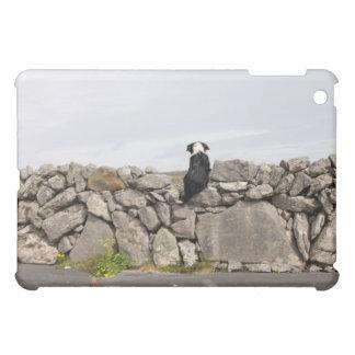Persiga sentarse en una pared de piedra irlandesa